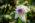 Unknown Summer Flower in Park Schönfeld Botanical Garden