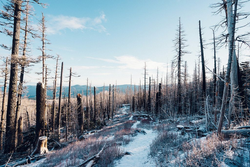 Snow Winter Fallen Trees